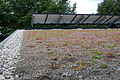Bisley Green Shop roof 3.jpg