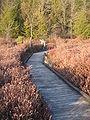 Black Moshannon SP Bog Boardwalk 2.jpg
