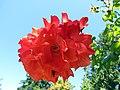 Blossom Cluster (11446094536).jpg