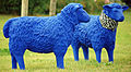 Blue Sheep 04.jpg