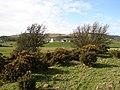 Bluehill, Auchencairn - geograph.org.uk - 714252.jpg