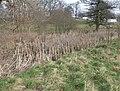 Boggy bit by the footpath to Plas Newydd - geograph.org.uk - 692586.jpg