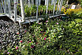 Border and greenhouse Capel Manor College Gardens Enfield London England.jpg