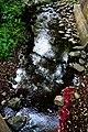 Borders of the Creek (3896558020).jpg