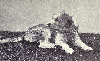 Barak hound - A Bosnian Coarse-haired Hound from 1915.