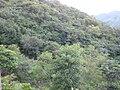 Bosque semiselvatico alas orillas de san juan de cinco pinos.JPG