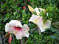 Botanični vrt (3990168665).jpg