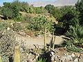 Botanical Garden of Eilat.JPG