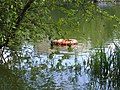 Bramfelder See (Hilfe) - panoramio.jpg