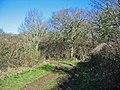 Bridleway near Harley Down, Dorset - geograph.org.uk - 1045341.jpg