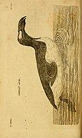 British zoology (1776) (14802996353).jpg