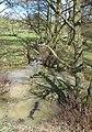 Brook in Eastnor Deer Park - geograph.org.uk - 746777.jpg