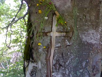 Serb traditions - The cross inscribed in the bark of a zapis (a beech in this case) near the village of Crna Trava, south-east Serbia.