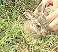 Bunny greek.jpg