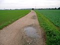 Bury Farm track - geograph.org.uk - 67186.jpg