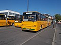 Bus station, MAN SL 283 and Ikarus C80, 2017 Mátészalka.jpg