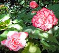 Butchart Gardens, Victoria, British Columbia, Canada (28912408440).jpg