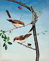Butcher Birds, 1893.jpg
