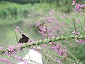 Butterfly and bush (28277301264).jpg