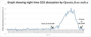 Photorespiration - Overnight graph of CO2 absorbed by a CAM plant
