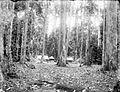 COLLECTIE TROPENMUSEUM Bouwwerken in een bos TMnr 10003915.jpg