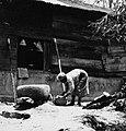 COLLECTIE TROPENMUSEUM Een vrouw zeeft het gestampte rijstmeel TMnr 20000283.jpg