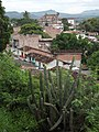 Cactus (Cactaceae). - panoramio.jpg