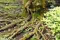 Callosciurus erythraeus 赤腹松鼠 - panoramio.jpg