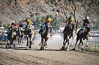 Camel Cup, Alice Springs