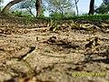 "Camping municipal ""Los Tatane"" - panoramio - Carlos Hacen (3).jpg"