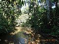 Carara National Park 02.jpg