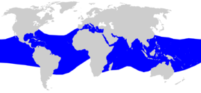 Description de l'image  Carcharhinus falciformis distmap.png.