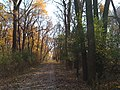 Catherine Chevalier Woods Forest Preserve - panoramio (4).jpg