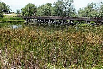 Cedar Hill State Park - Wetlands area in Cedar Hill State Park
