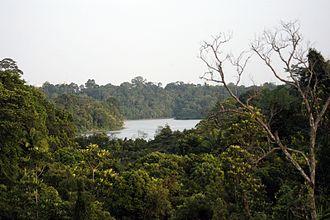 Central Catchment Nature Reserve - Central Catchment Nature Reserve