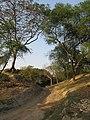 Chandraketugarh Mound - Berachampa 2012-02-24 2517.JPG