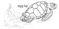 Character A1. Egg lay (V01a).png