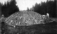Wood pile before covering it by turf or soil, and firing it (around 1890)
