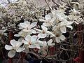 China - Summer Palace 19 (133976264).jpg