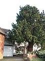Church End, Shustoke, A tucked-away cottage - geograph.org.uk - 111187.jpg