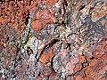 Clinker (Wasatch Formation, Lower Eocene; coal fire metamorphism at 19 ka, Late Pleistocene; large block at Interstate 90 west-bound hilltop rest area, east of Buffalo, Powder River Basin, Wyoming, USA) 1 (20130562955).jpg