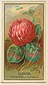 Clover (Trifolium pratense), from the Flowers series for Old Judge Cigarettes MET DP822023.jpg