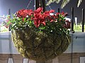 Coir Basket for Garden Plants 01.jpg