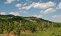 Colline del Roero con il castello di Guarene sullo sfondo.jpg