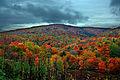 Colorful-autumn-mountain - Virginia - ForestWander.jpg