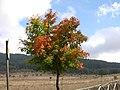 Colori dell'autunno - panoramio.jpg