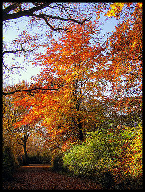 have a beautiful autumn dear friends