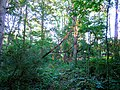 Conservancy Trail - panoramio.jpg