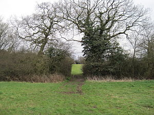 Copthall South Fields - Image: Copthall South Fields hedgrerow