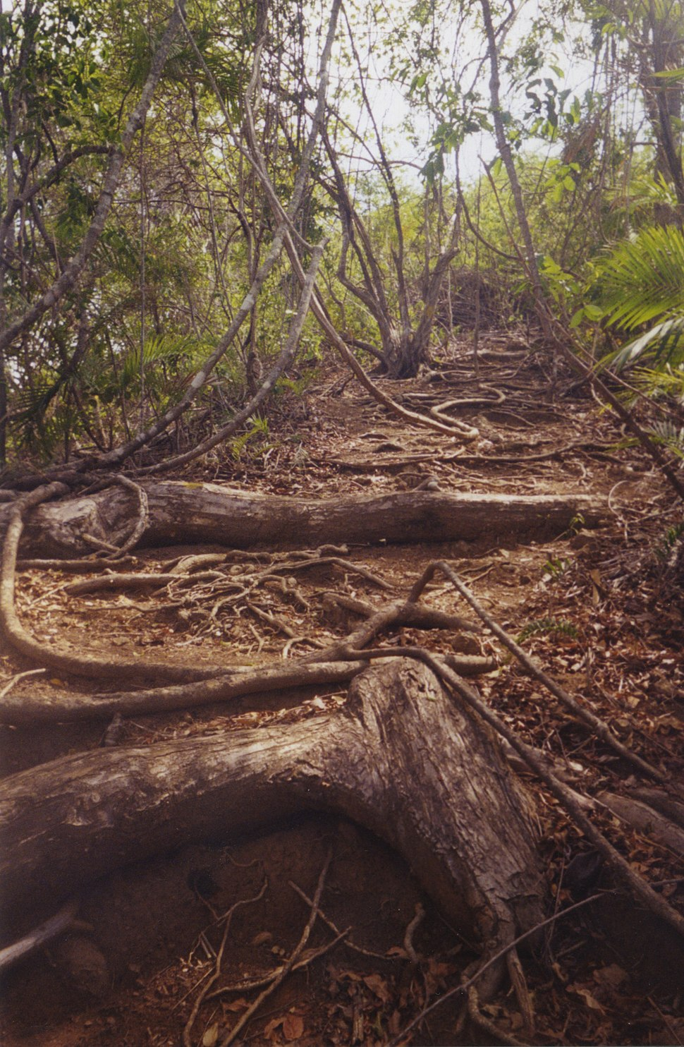 Costarica rainforest1